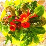 Portrait of 1-ounce Solviva Salad