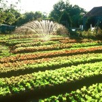The outdoor summer garden