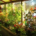 Indoor garden in winter