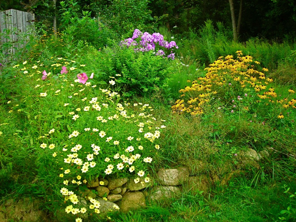 From early Spring to hard frost, this garden produces beauty and habitat for butterflies and birds.
