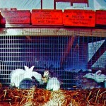 On fierce -4F blizzard nights, the rabbit room was 55F because of the heat from bodies and bedding.