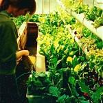 Annika harvesting 5 lower levels